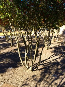 Looking at tree trunks and shadows