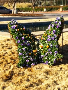 Botanic-Garden-Butterfly
