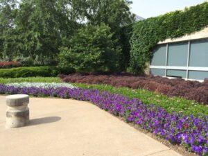 BotanicalGardens-Petunias