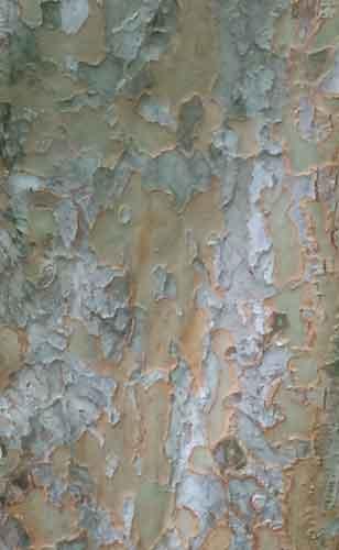 Bark-original